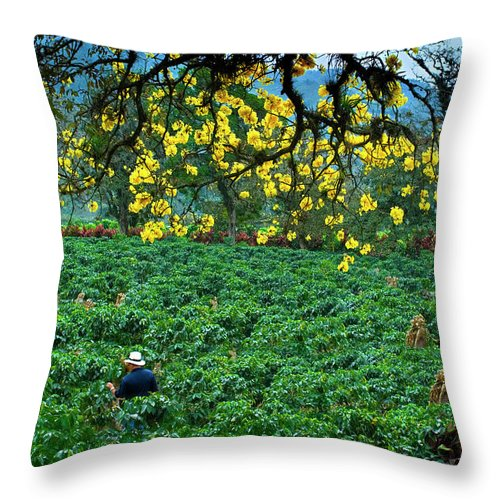 Expertise Throw Pillow featuring the photograph Orosi Valley by John Coletti