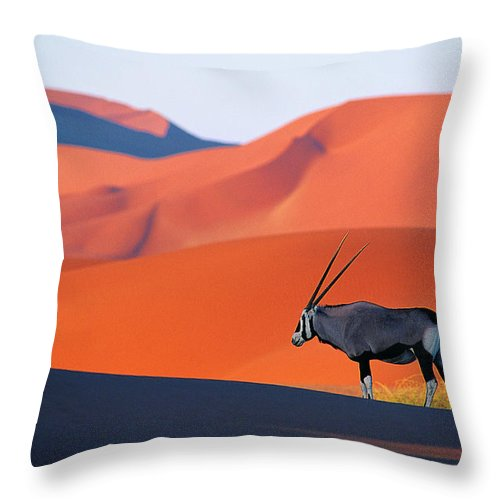 Scenics Throw Pillow featuring the photograph Oryx Antelope by Natphotos