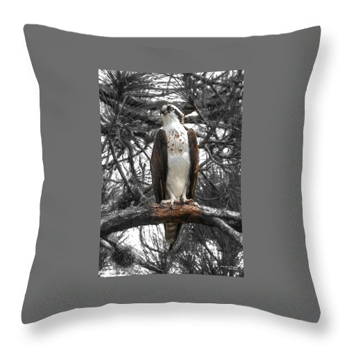 Osprey Throw Pillow featuring the photograph Overseer by Sally Sperry