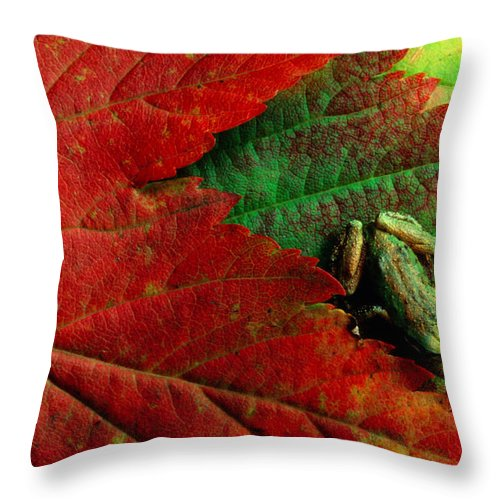 Pacific Tree Frog Throw Pillow featuring the photograph Pacific Tree Frog Hyla Regilla On Maple by Art Wolfe