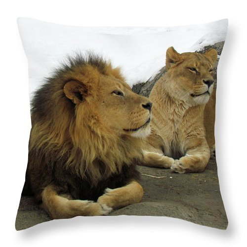 Animal Themes Throw Pillow featuring the photograph Pair Of Lions by Images By Nancy Chow