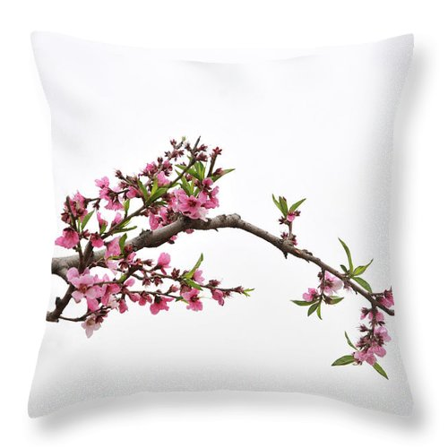 Season Throw Pillow featuring the photograph Peach by Sdlgzps