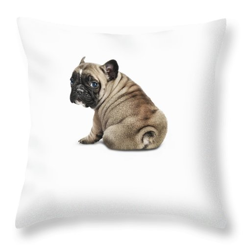 Pets Throw Pillow featuring the photograph Pedigree French Bulldog Against A White by Andrew Bret Wallis
