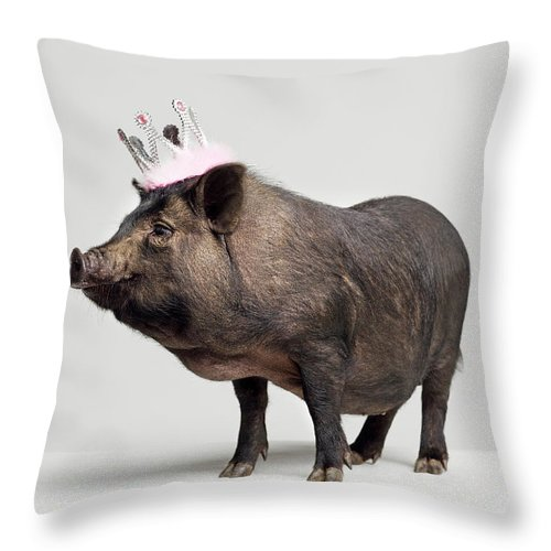 Crown Throw Pillow featuring the photograph Pig With Toy Crown On Head, Studio Shot by Roger Wright