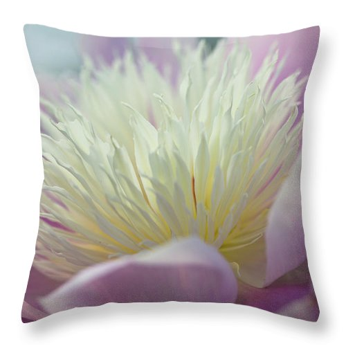 Toronto Throw Pillow featuring the photograph Pink And White Peony by Lynda Murtha
