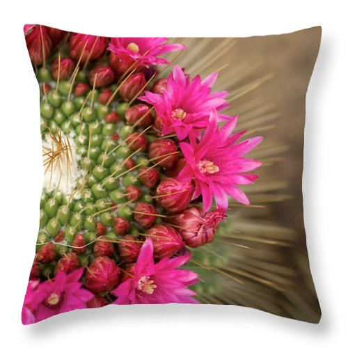 Bud Throw Pillow featuring the photograph Pink Cactus Flower In Full Bloom by Zepperwing