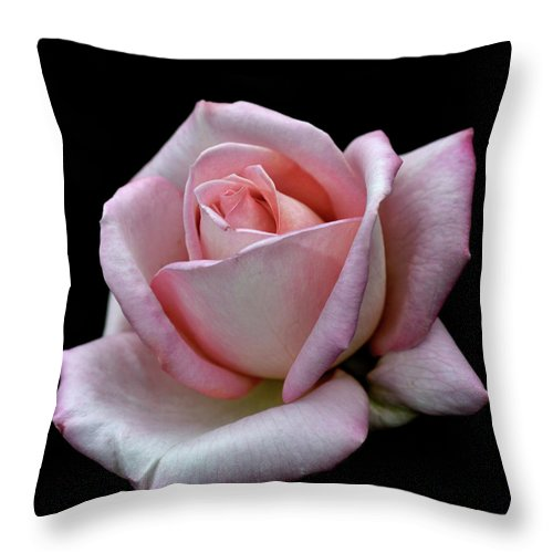 Part Of A Series Throw Pillow featuring the photograph Pink Rose by I Love Photo And Apple.