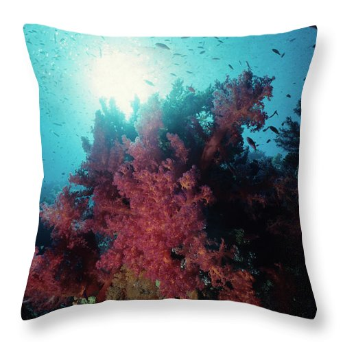 Underwater Throw Pillow featuring the photograph Pink Soft Coral And Anthias by Tammy616