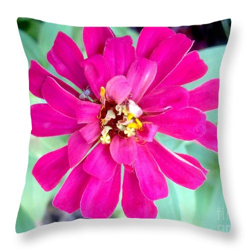 Pink Zinnia With Spider Throw Pillow featuring the photograph Pink Zinnia With Spider by Virginia Artho