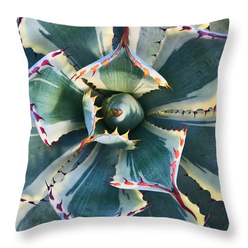Plant Throw Pillow featuring the photograph Pinwheel Succulent by Tom Gresham
