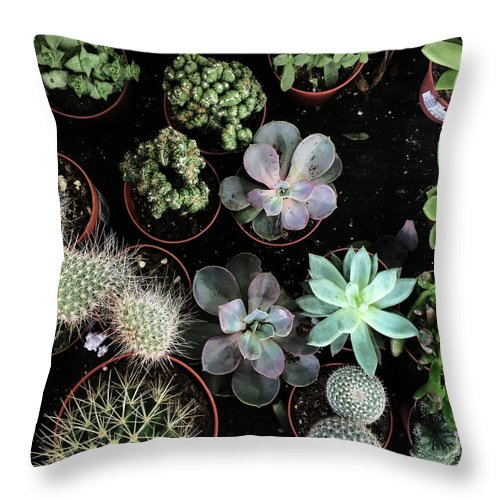 Plants Throw Pillow featuring the photograph Plant Collection by Cassia Beck
