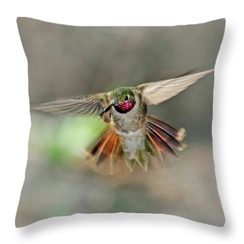 Dawn Throw Pillow featuring the photograph Poetry In Motion - Hummingbird Hovering by Eastman Photography Views Of The Southwest