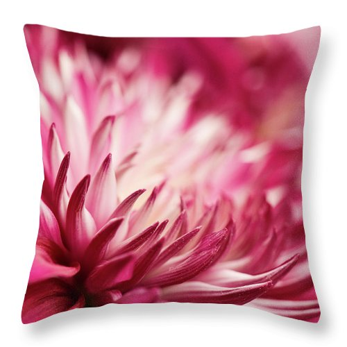Petal Throw Pillow featuring the photograph Poised Petals by Jody Trappe Photography