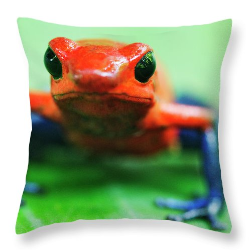 Animal Themes Throw Pillow featuring the photograph Poison Dart Frog by Jeremy Woodhouse