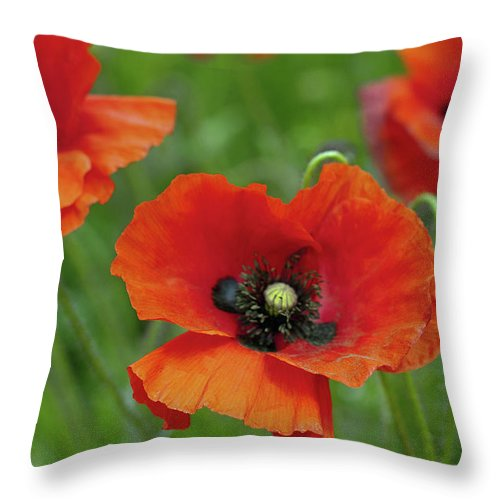 Petal Throw Pillow featuring the photograph Poppies by Photo By Judepics