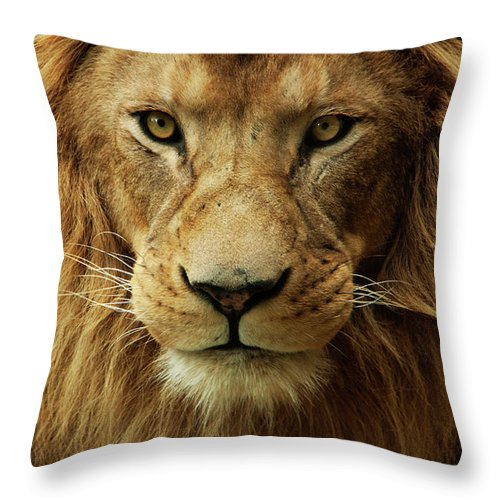 Animal Themes Throw Pillow featuring the photograph Portrait Male African Lion by Brit Finucci