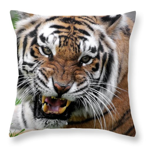 Paw Throw Pillow featuring the photograph Portrait Of An Aggressive Bengal Tiger by Empphotography
