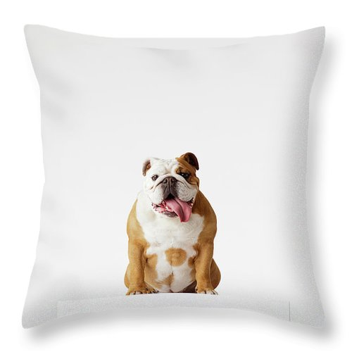 Pets Throw Pillow featuring the photograph Portrait Of British Bulldog Sitting by Compassionate Eye Foundation/david Leahy