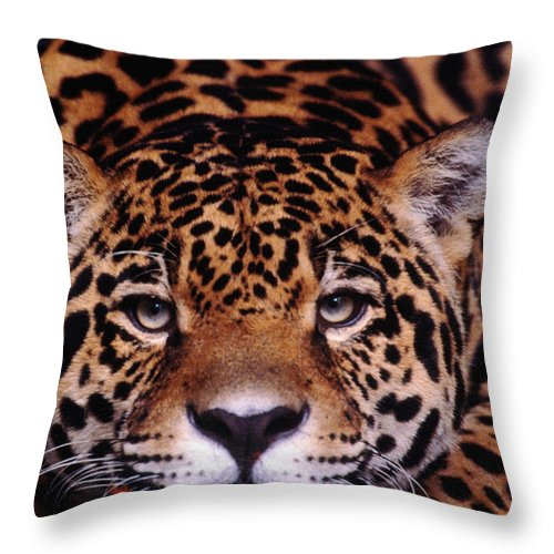 Latin America Throw Pillow featuring the photograph Portrait Of Jaguar, Brazil by Mark Newman