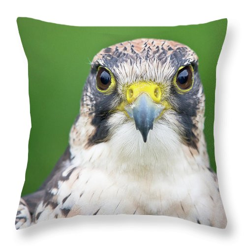 Animal Themes Throw Pillow featuring the photograph Portrait Of Peregrine Falcon by Michal Baran