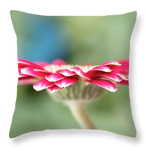 Abstracts Throw Pillow featuring the photograph Pretty Petals by Marilyn Cornwell