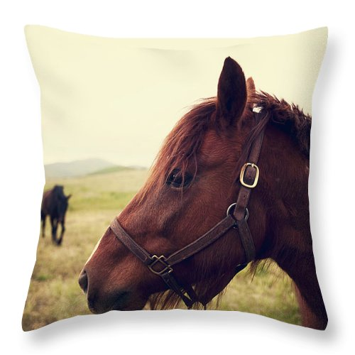Horse Throw Pillow featuring the photograph Profile Of Brown Horse In Meadow by Shari Weaver Photography