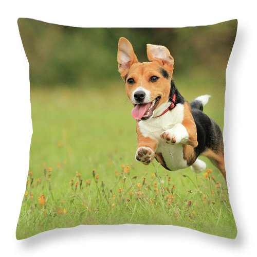 Grass Throw Pillow featuring the photograph Puppy by Paul Baggaley