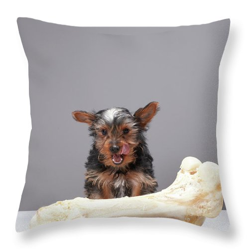 Pets Throw Pillow featuring the photograph Puppy With Oversized Bone by Martin Poole