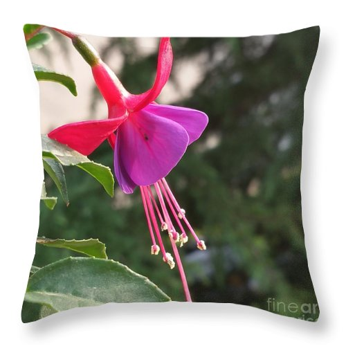 Throw Pillow featuring the photograph Purple Bell by Paola Baroni