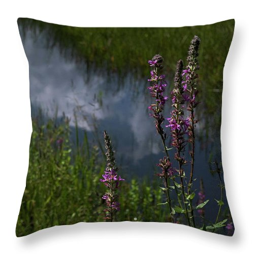 Purple Loosestrife Throw Pillow featuring the photograph Purple Daydream by Jerry LoFaro