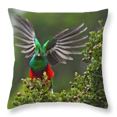 Animal Themes Throw Pillow featuring the photograph Quetzal Taking Flight by Photograph Taken By Nicholas James Mccollum