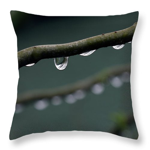 Windsor Throw Pillow featuring the photograph Rain Branch by Photography By Gordana Adamovic Mladenovic