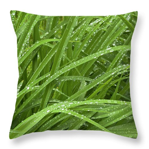 Tranquility Throw Pillow featuring the photograph Raindrops Of Daylily Foliage by Adam Jones