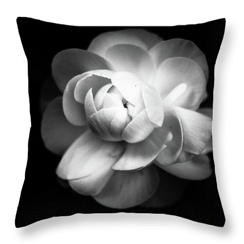 Black Background Throw Pillow featuring the photograph Ranunculus Flower by Annfrau