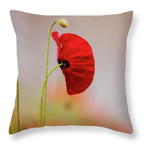Poppy Throw Pillow featuring the photograph Red Corn Poppy Flowers by Nailia Schwarz