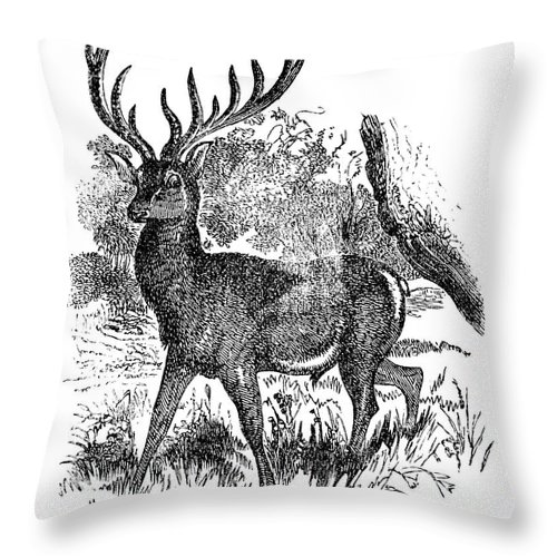 Engraving Throw Pillow featuring the digital art Red Deer Stag Engraving by Nnehring