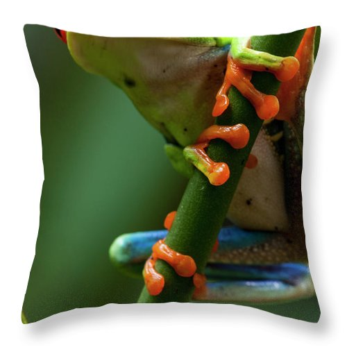 One Animal Throw Pillow featuring the photograph Red-eyed Tree Frog, Costa Rica by Paul Souders
