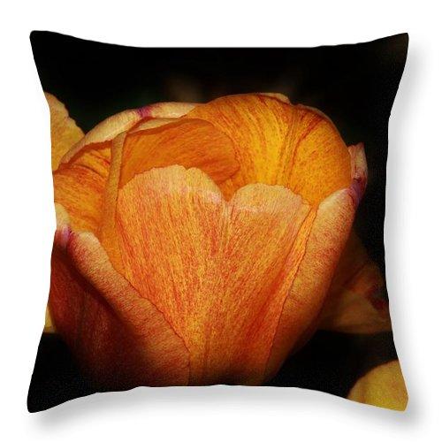 Karen Silvestri Throw Pillow featuring the photograph Red Orange Yellow Tulip by Karen Silvestri