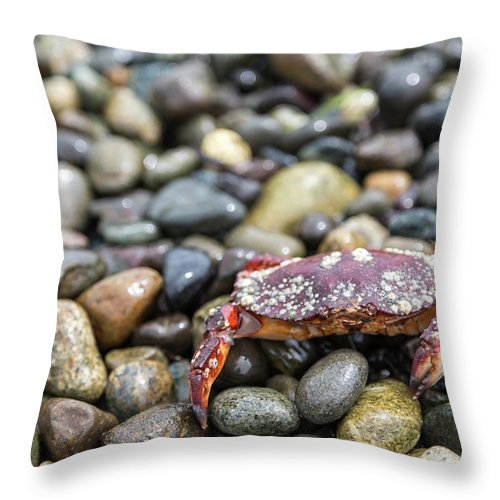 Water's Edge Throw Pillow featuring the photograph Red Rock Crab On A Pebble Covered Beach by Stevedf