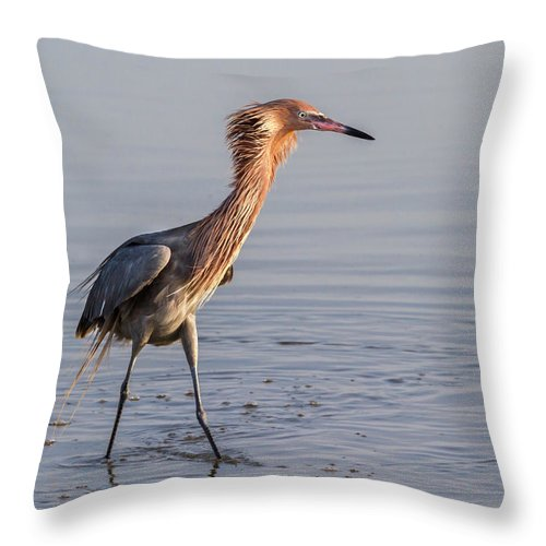 American Fauna Throw Pillow featuring the photograph Reddish Egret In Breeding Plumage by Ivan Kuzmin