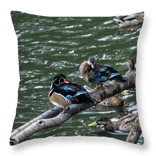 Duck Throw Pillow featuring the photograph Resting Ducks by Rob Olivo