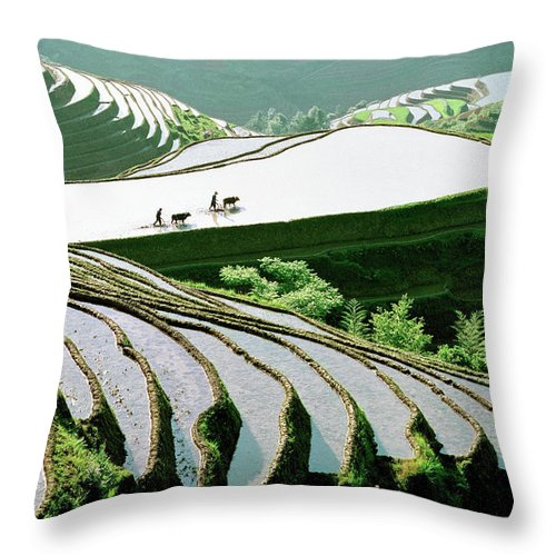 Chinese Culture Throw Pillow featuring the photograph Rice Terraces by Kingwu