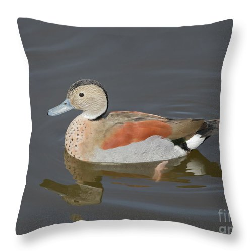 Ringed Teal Throw Pillow featuring the photograph Ringed Teal by Eva Lechner
