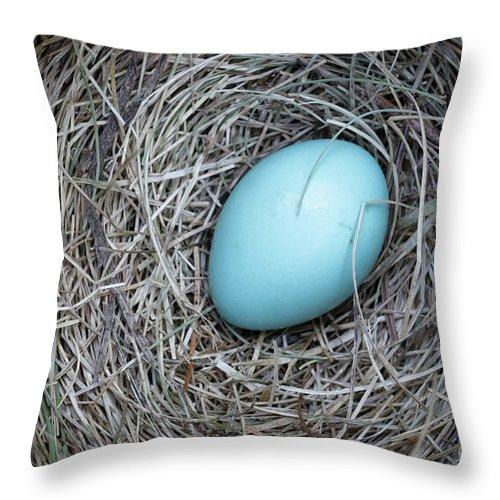 Bird Throw Pillow featuring the photograph Robin's Egg by Edward Fielding