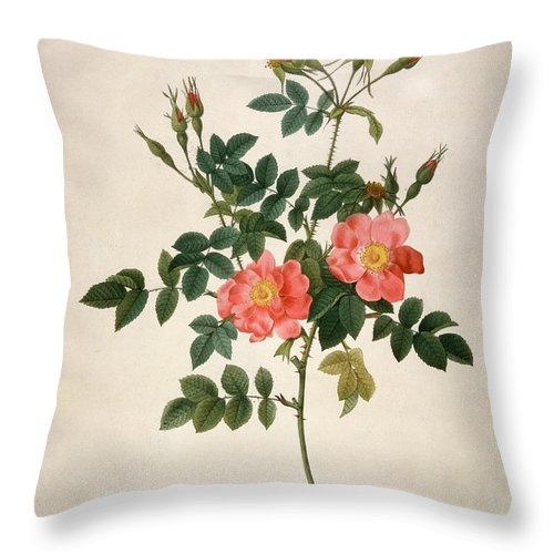 19th Century Throw Pillow featuring the mixed media Rosa Rubiginosa by Pierre-Joseph Redoute