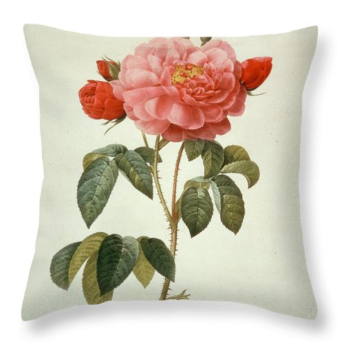 19th Century Throw Pillow featuring the mixed media Rose La Duchesse Dorleans by Pierre-Joseph Redoute