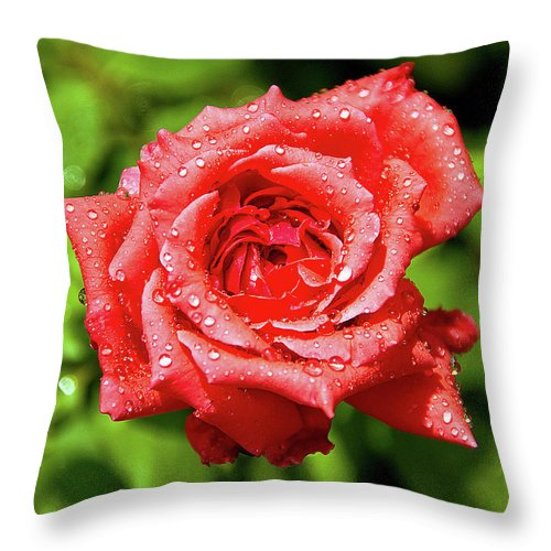New Delhi Throw Pillow featuring the photograph Rose With Raindrops by Charlie Joe