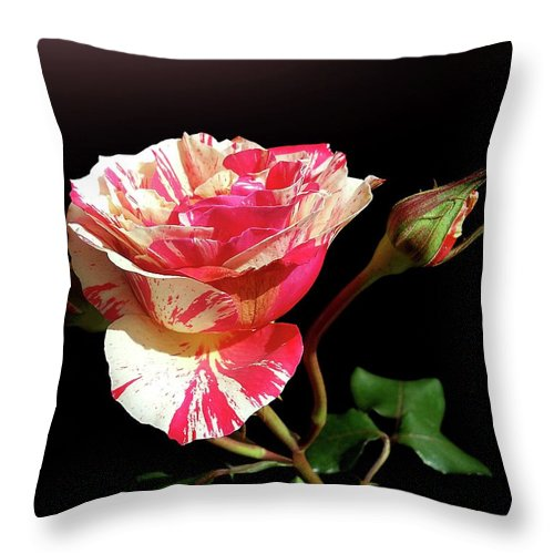 Bud Throw Pillow featuring the photograph Rose With Two Buds by Gitpix