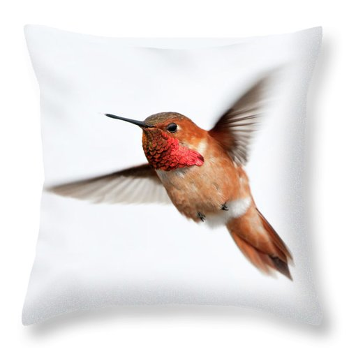 Hanging Throw Pillow featuring the photograph Rufous Hummingbird Male - White by Birdimages