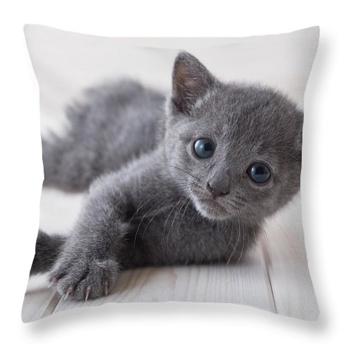 Pets Throw Pillow featuring the photograph Russian Blue Lying Down On Floor by Mixa